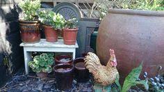 Brown pots