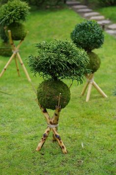 Unique Kokedama Ball Ideas for Hanging Garden Plants ball Moss Garden, Diy Garden, Succulents Garden, Garden Art, Planting Flowers, Flower Gardening, Garden Plants, String Garden, Ikebana
