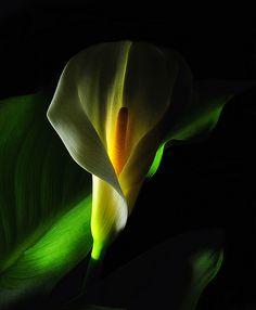 Using lighting style to create mood: High-key and low-key lighting - Digital Photo Secrets
