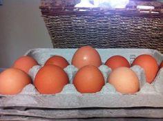 Homeschool Post | Raising chickens