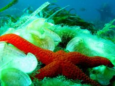 Estrellas de mar.1