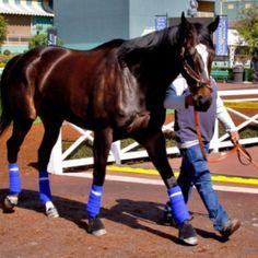 Zenyatta Zenyatta Horse, Thoroughbred Horse, Kentucky Horse Park, The Great Race, American Pharoah, Sport Of Kings, Racehorse, Animals Beautiful, Beautiful Horses