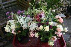 a few buckets of flowers freshly cut at www.commonfarmflowers.com