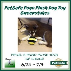 PetSafe Pogo Plush Dog Toy Sweepstakes