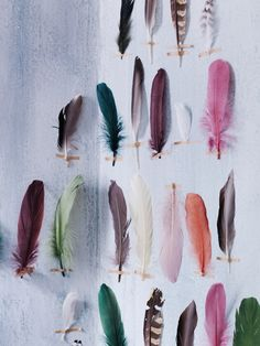 Collectionite plumes