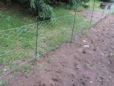 1000 Ideas About Chicken Wire Fence On Pinterest Dog