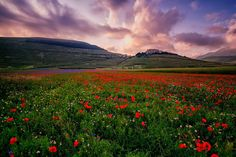 Print of Italy, Marche, Sibillini National Park, plain of Castelluccio di Norcia Prado, Travel Images, Travel Pictures, Places To Travel, Places To See, Beautiful World, Beautiful Places, One Day Tour, Scenery Pictures