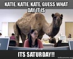 """Funny video Hump Day Camel by Geico. Video """"Hump Day Camel"""" by Geico.""""Hump day"""" by Geico - Who's happier than a Camel on Wednesday Hump Day. - Get Happy. Get Geico.""""Hump Day"""" also mean. Happy Birthday Meme, Birthday Wishes, Birthday Memes, 40th Birthday, Birthday Ideas, Trump Birthday, Brother Birthday, Card Birthday, Brother Sister"""
