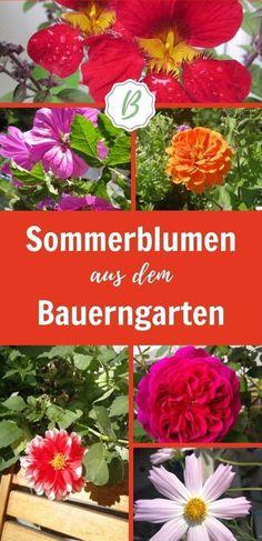 Für kleine Gärten und Kübel eignen sich diese romantischen Sommerblumen aus dem Bauerngarten. Sie gedeihen im Balkonkasten und Kübel und sind den Sommer über dauerblühend. Lerne die schönsten Sorten für die Sonne und den Schatten kennen. Einige der Blumen sind sogar essbar. #Bauerngarten #Sommerblumen Austin Rosen, Balcony Plants, Summer Flowers, Mediterranean Plants, Best Flowers, Little Gardens