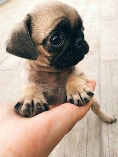》pinterest : @ThisGirlsDream《 More #puppies
