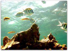 Submarinismo en Playa Girón. Cuba, Sci Fi, Photos, Scuba Diving, Beach, Viajes, Science Fiction, Pictures