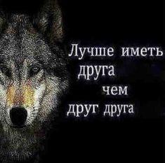 Stupid Cat, Stupid Memes, Funny Memes, Hello Memes, Russian Humor, Happy Memes, Fun Live, Fresh Memes, Life Pictures