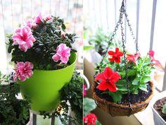 Những ban công nhỏ vẫn rực rỡ hoa lá - The small balcony was brilliant greenery