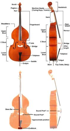 anatomy of the upright bass -  barry bales