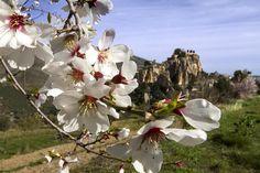 Guadalest en Flor de Almendro