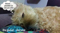 pierdete un rato... #funny #cute #estamostanagustito