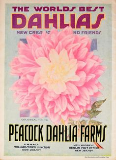 The world's best dahlias /. Dahlialand, N.J. :The Nursery.. biodiversitylibrary.org/page/46109335