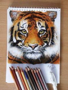 Hermoso dibujo de un gran felino!