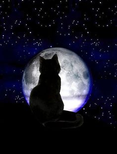 black cat moon and like OMG! get some yourself some pawtastic adorable cat apparel! Beautiful Moon, Beautiful Cats, Silhouette Chat, Photo Chat, Cat Wallpaper, Drawing Skills, Sketch Drawing, Sketches, Warrior Cats