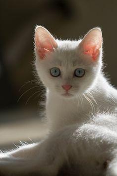 Sunlight on a kitten