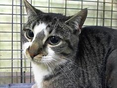 Young girl Carol needs a chance at life.ACC means her life is worthless.will die after Noon tomorrow. URGENT.VISIT pets on death row on Facebook