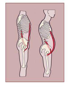 Psoas major and rectus abdominus