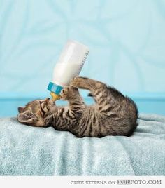 Very interesting post: TOP 24 Cats and Kittens Pictures.сom lot of interesting things on Funny Animals, Funny Cat. Animals And Pets, Baby Animals, Funny Animals, Cute Animals, Wild Animals, Cute Cats And Kittens, Kittens Cutest, Ragdoll Kittens, Tabby Cats