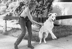 Communicative dog training how to Please follow #dogtrainingnearme