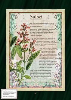 Salbei - Salbeitee