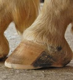 The Natural Trim: The Solution For Healthy Horse Hoof Care