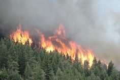 From the Daily Camera, June 26th, Fire near Boulder.