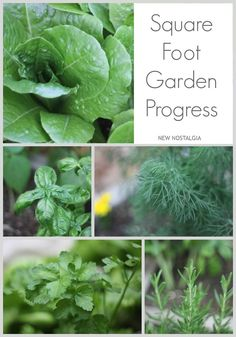 #NewNostalgia: My Square Foot Garden Progress #garden #herbs #squarefootgarden