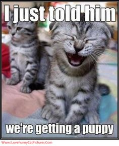 We're Getting A Puppy! LMAO... That's what my boyfriend looks like when I tell him we're getting a puppy!