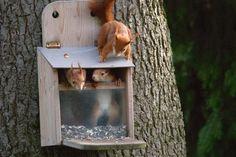 """Aus: """"Eichhörnchen ganz nah"""" von Heike Adam // BLV Buchverlag: Eichhörnchen im Futterkasten - mit Bauanleitung"""