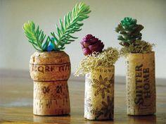 コルクに多肉植物を植えて、並べてディスプレイするというアイデア。器用ですね!