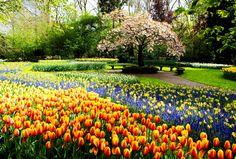 floral garden - Google Search