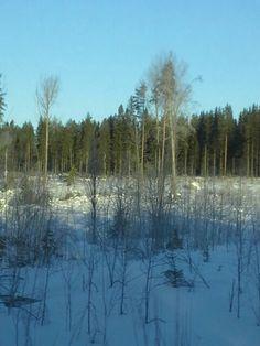 Metsä talven kylmä ilma auringon pasta taivaalla kevään tulossa linnnut lentävät kesällä