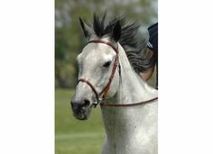 horse photography horses blue roan photography