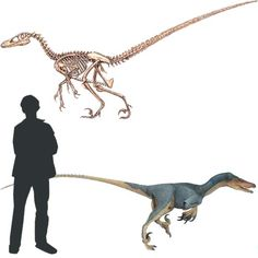 velociraptor FICHA