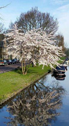 Lente in Leiden