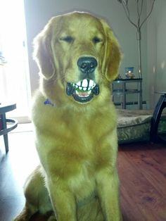 Golden retriever - funny ball :)