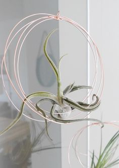 DIY | Air Plants als stylische Deko | interior design, kupfer, copper, minimal decor, Tillandsien