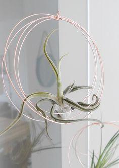 DIY   Air Plants als stylische Deko   interior design, kupfer, copper, minimal decor, Tillandsien