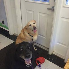 "Denise's Tolby and Brandon: her boys are 11 and 12 years old.  ""Great stuff I have it for my dogs after spending over $1000 in 6 months there ears are almost clear With Eco ear."" #EcoEars #Labs #Labradors"