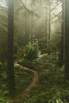 Misty path in the forest (Oregon) by Anna Calvert