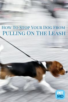 Are you taking your dog for a walk or is it the other way around?