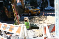 """It was 88 degrees today, but Owen & Sophie were still hard at work fixing our streets!  When you see people fixing our streets, tell them, """"Thank You!""""  It is a hard job and they keep us safe. Secret Photo, American Sign Language, Service Dogs, New Books, How To Find Out, Nyc, Apple, Future, Pictures"""