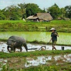 Plowing with water buffalo Village Photography, Landscape Photography, People Of The World, Countries Of The World, Indochine, Seen, Vietnam Travel, Wildlife Art, Country Life