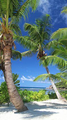 Green / White / Blue Baie Lazare / Seychelles / 2013