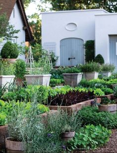 love the tall planters for herbs that'll take over the whole garden if you let em, like mint